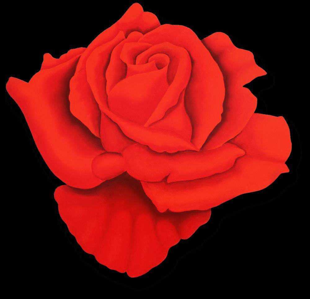 """Rosa Classica, Benini 1983, 41"""" x 38"""""""