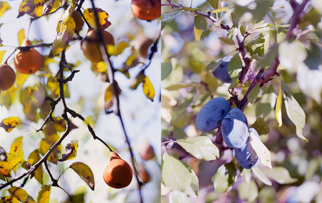 02.Pears-and-Plums-Oregon.jpg