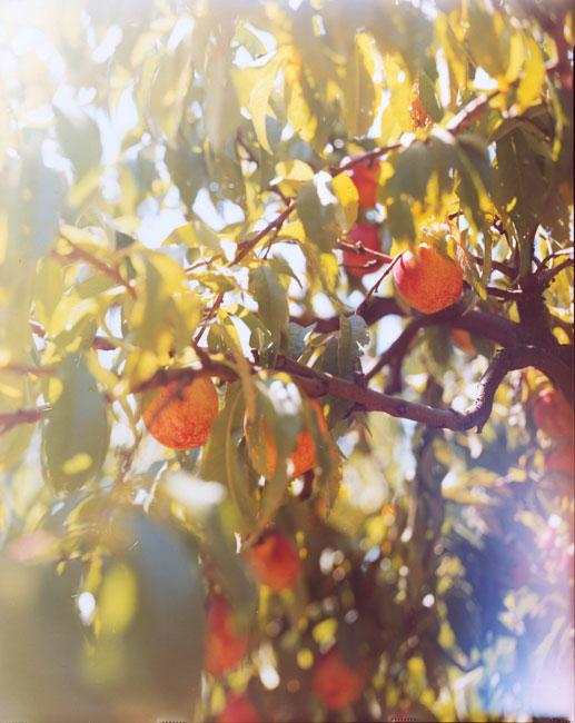 05.Bosc-Pears-Oregon.jpg