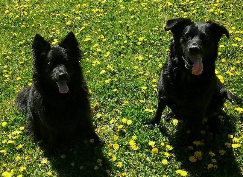 Elsie & Raven