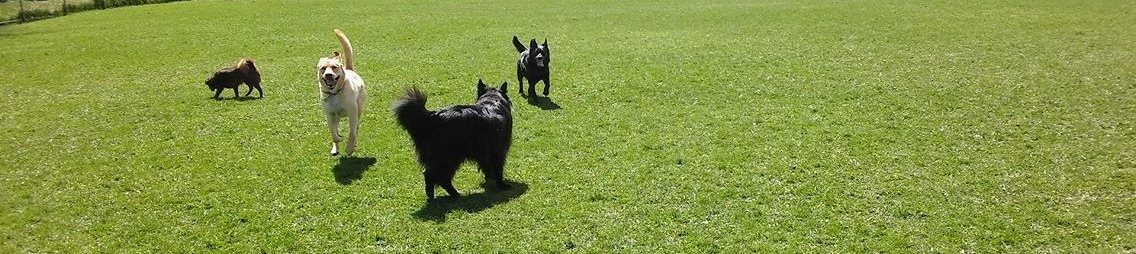 Bindi, Fitz, Elsie & Raven