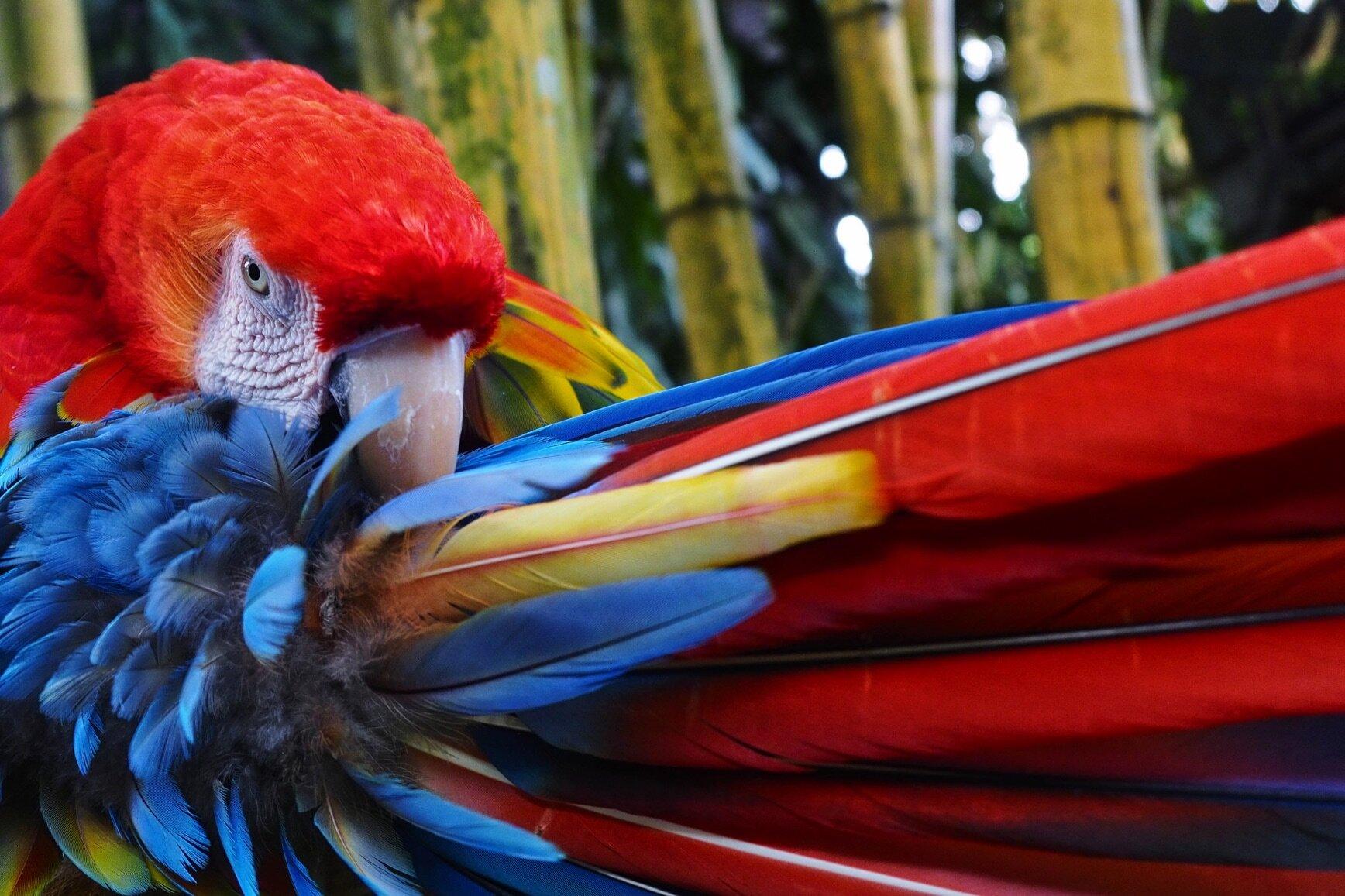 Roatan Macaw Encounters
