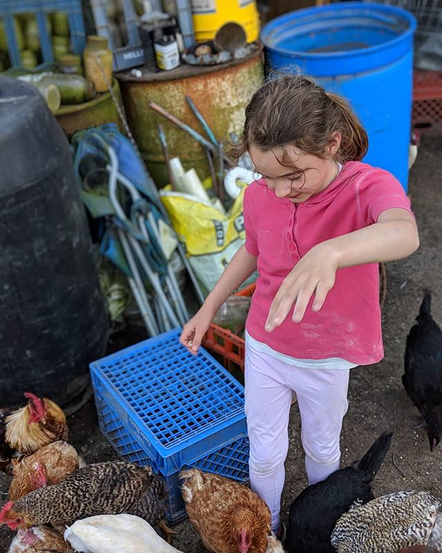 It's feeding time!! I get to feed all of the animals on the farm in our latest video! Chickens ✔️ Hens ✔️ Ducks ✔️ Rabbits ✔️ Turkey ✔️ Mr Bitey ✔️ Link for the video in bio! @thetravelvlogfamily . . . . . #travelvlog #family #kidstravel #kidstravellers #kidstraveller #kidstraveler #kidstravel #kidstraveling #kidstraveltoo #kidstravelling #travelkids #kidslovetravel #kidswhotravel #travelwithkids #kidsthattravel #awesometravelkids #travelingkids #welltraveledkids #travellingwithkids #travellingkids #familytravel #familyadventure #familytravelblog #familytravels #familytraveling #familyvlog #familytravelvlog #familyvlogger #familyvloggers