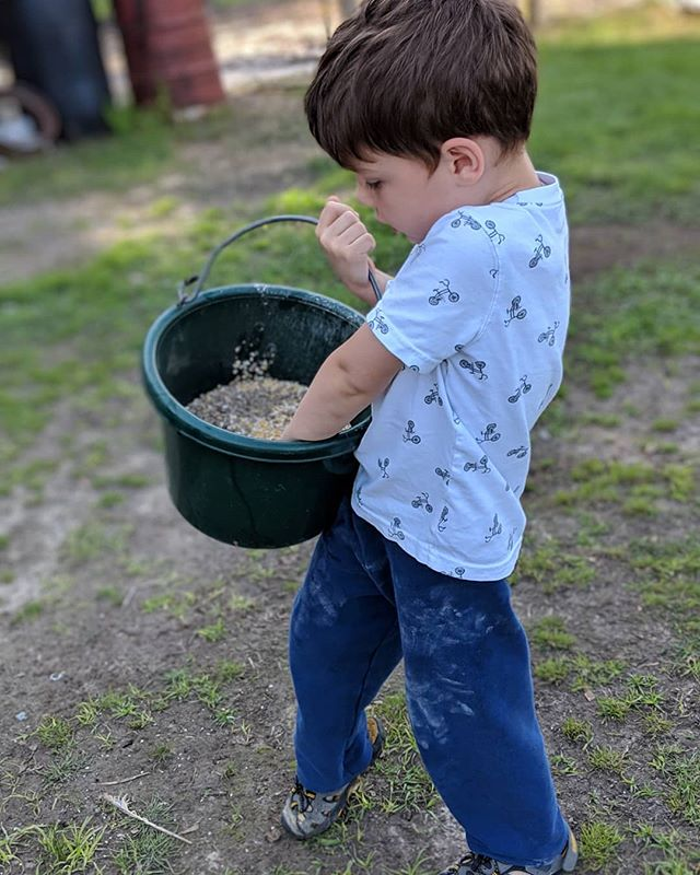 Bak Bak Bak Bak!!! Chickens!! It's feeding time!! 🐔🐓🐔🐓🐔🐓 @thetravelvlogfamily . . . . . #travelvlog #family #kidstravel #kidstravellers #kidstraveller #kidstraveler #kidstravel #kidstraveling #kidstraveltoo #kidstravelling #travelkids #kidslovetravel #kidswhotravel #travelwithkids #kidsthattravel #awesometravelkids #travelingkids #welltraveledkids #travellingwithkids #travellingkids #familytravel #familyadventure #familytravelblog #familytravels #familytraveling #familyvlog #familytravelvlog #familyvlogger #familyvloggers