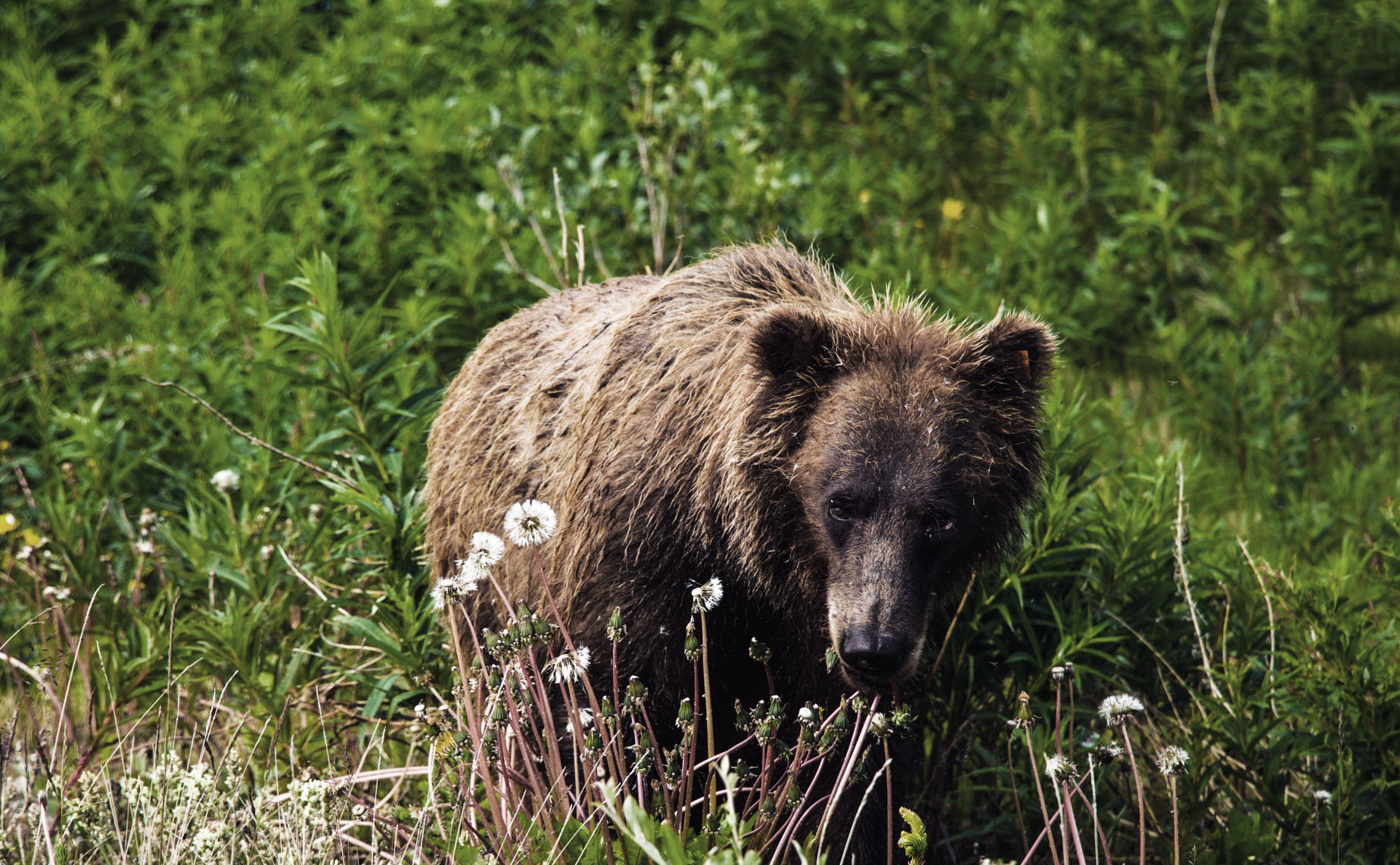 FISH AND WILDLIFE MANAGEMENT - By Rachel Levy-McLaughlin