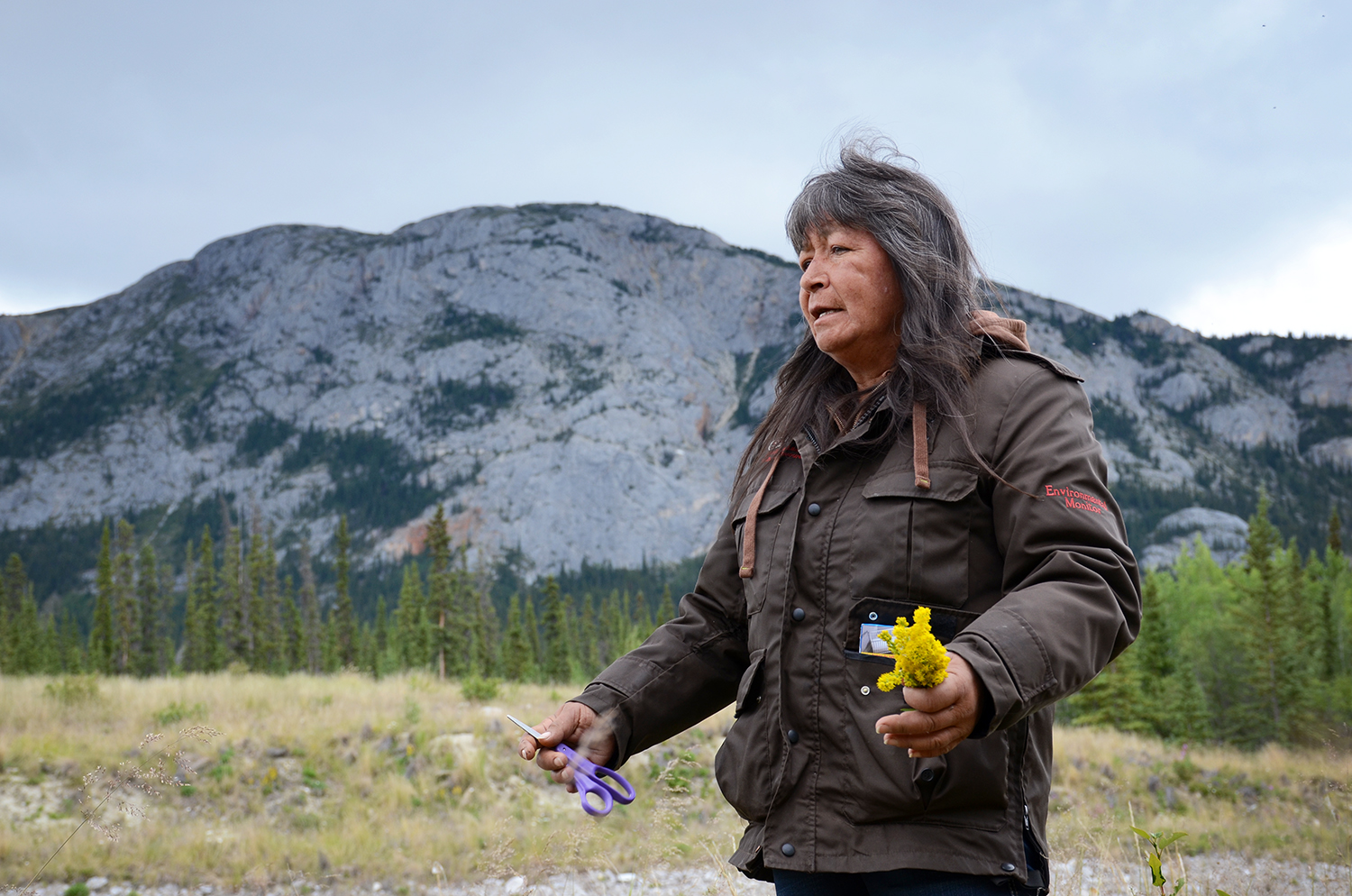 Donna Wolfe has been harvesting northern plants since she was a child, but her hobby recently turned into a profession. She turns them into teas, salves, ointments and other medicines