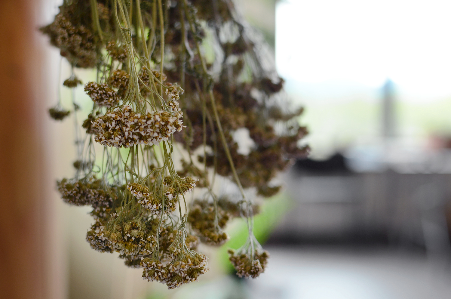 Gray says that you don't have to look far to find plants with medicinal properties, and yarrow is a perfect example of that. When it comes to the Yukon, it can be found everywhere.