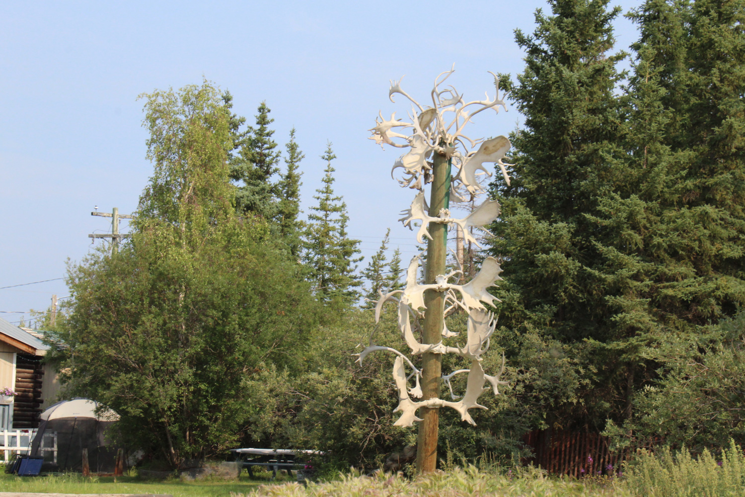 An Old Crow landmark, this antler pole sits outside the home of Stephen Frost, an elder in the community and a renowned hunter. (Photo: Sarah Sibley)