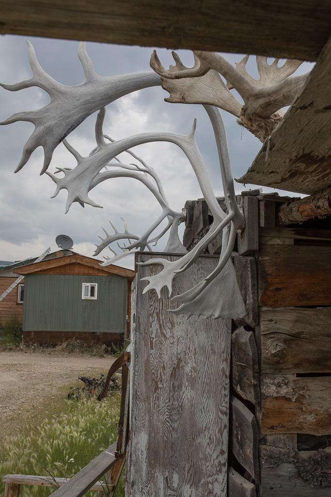 Caribou Antlers-2 - Old Crow-KH.jpg