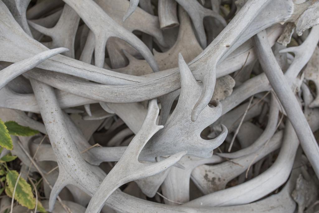 Caribou Antlers - Old Crow-KH.jpg