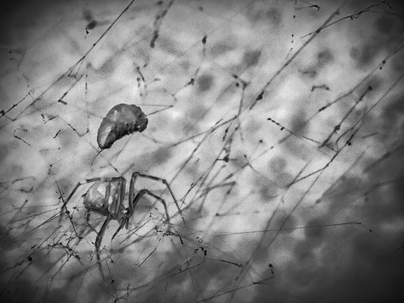 Digital photograph of a house spider, edited for an expressionist look(think The Cabinet of Dr. Caligari). Taken with the Fujifilm XT-3 & XF 23mm f/2 R WR.