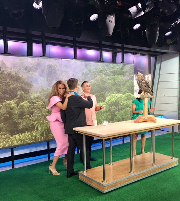 The 3-month-old Eagle Owl about to take off on the set of The TODAY Show.