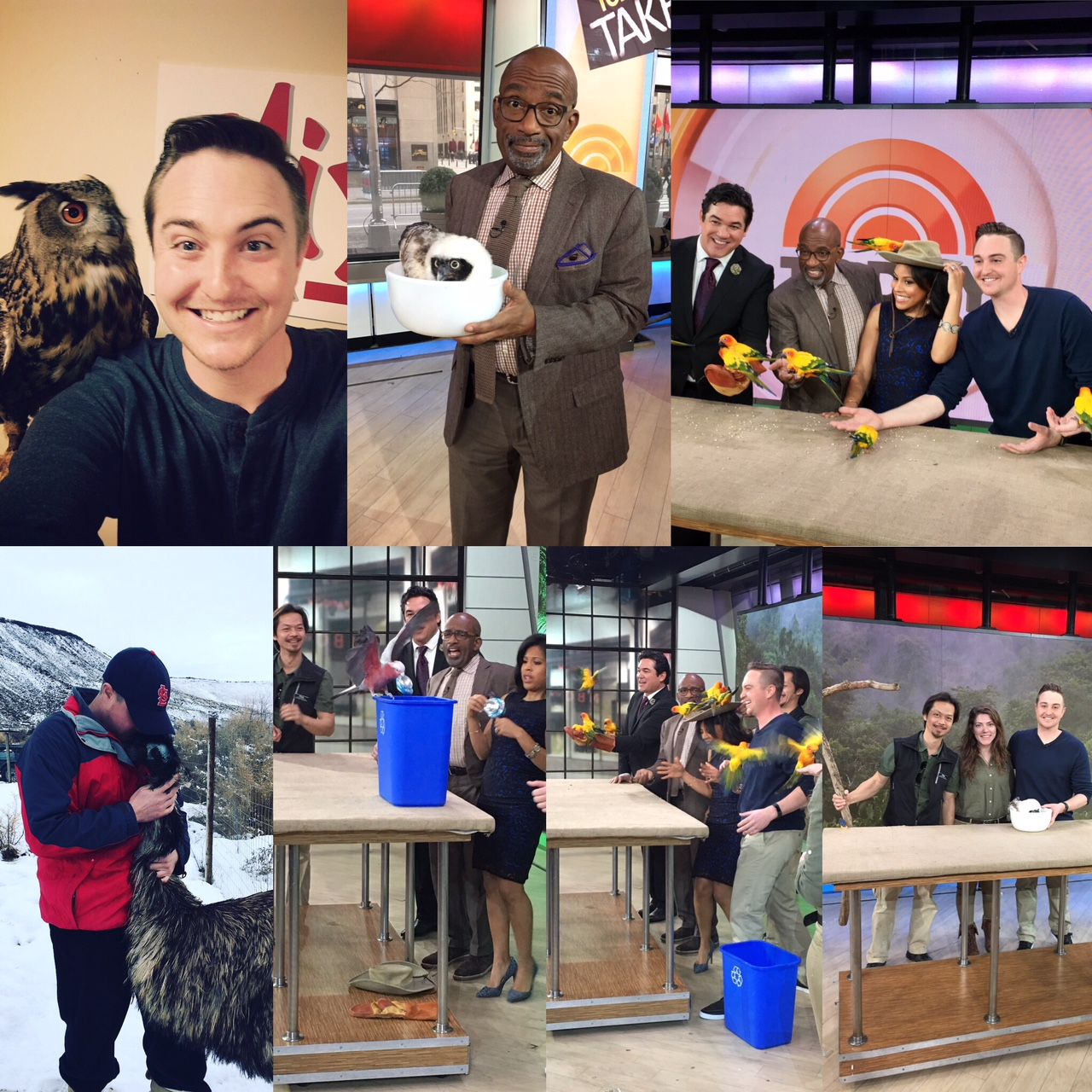 Top Left: Wally the Eurasian Eagle Owl from the World Center for Birds of Prey at Mix 106 Radio. Top Middle: Al Roker and owl chick. Top Right: On the set of The Today Show with Dean Cain, Al Roker, Sheinelle Jones, and a flock of Sun Conures. Bottom Left: Hugging Napoloen my pet emu. Bottom Middle: Birds taking over the set of The Today Show. Bottom Right: Pictured with Phung and Cora.