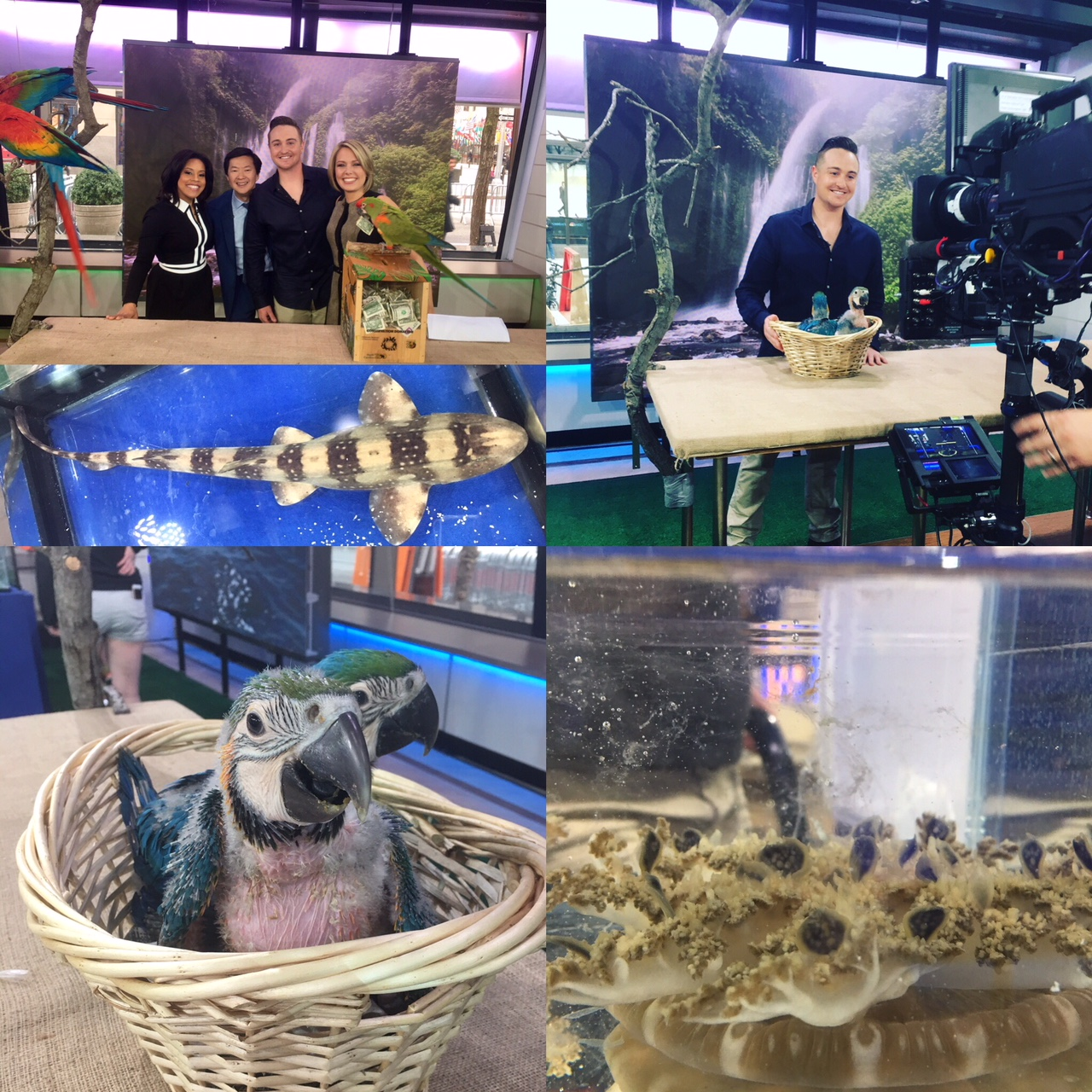 Top: On the set of  The Today Show  with anchors Sheinelle Jones, Dylan Dreyer, and actor Ken Jeong with macaws and a Bamboo Shark. Bottom Left: Baby Blue and Gold Macaws. Bottom Right: Upside-down Jellyfish