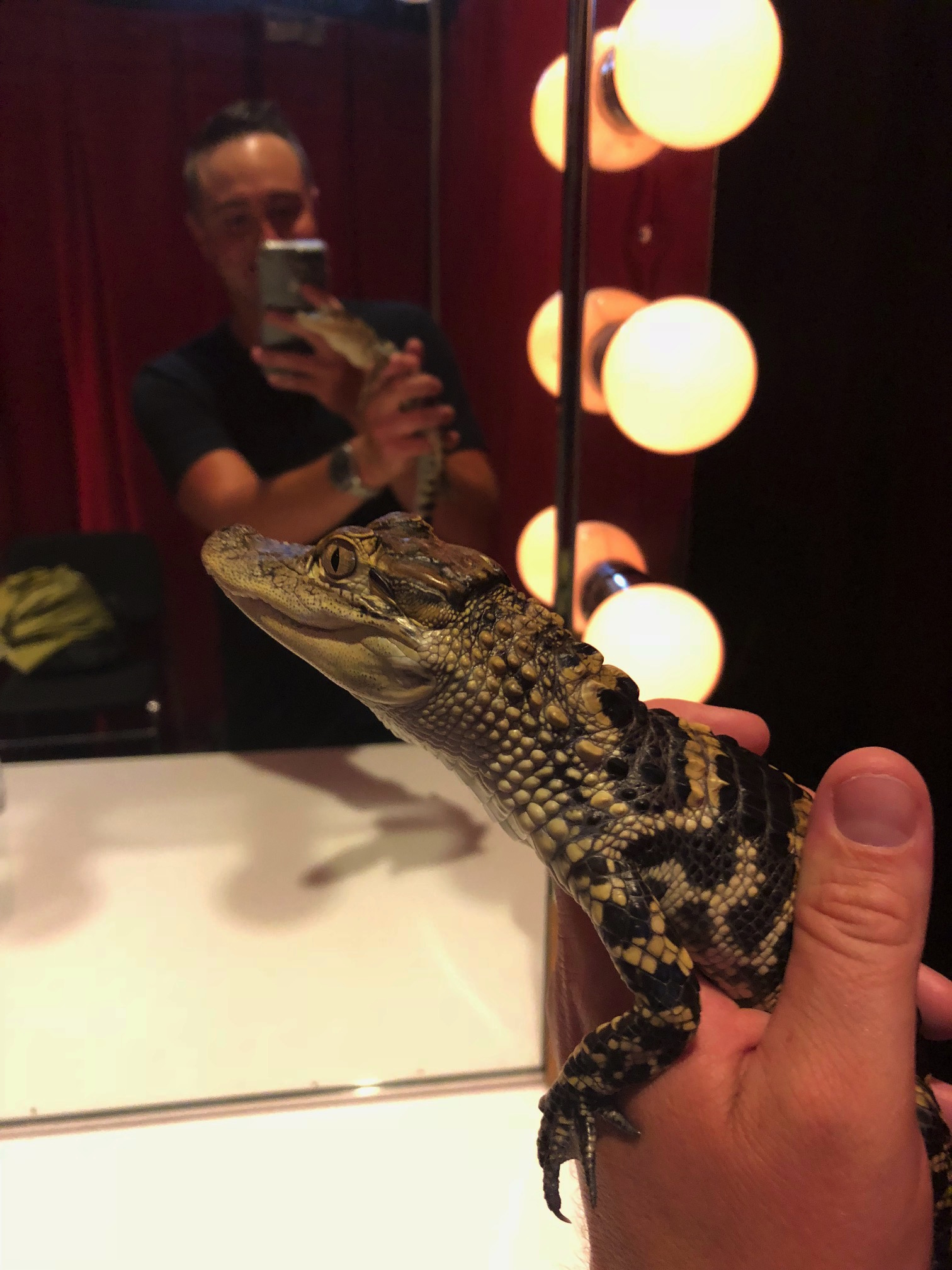 """""""Mork"""",a 10-month-old American Alligator from the Pittsburgh Zoo and PPG Aquarium."""