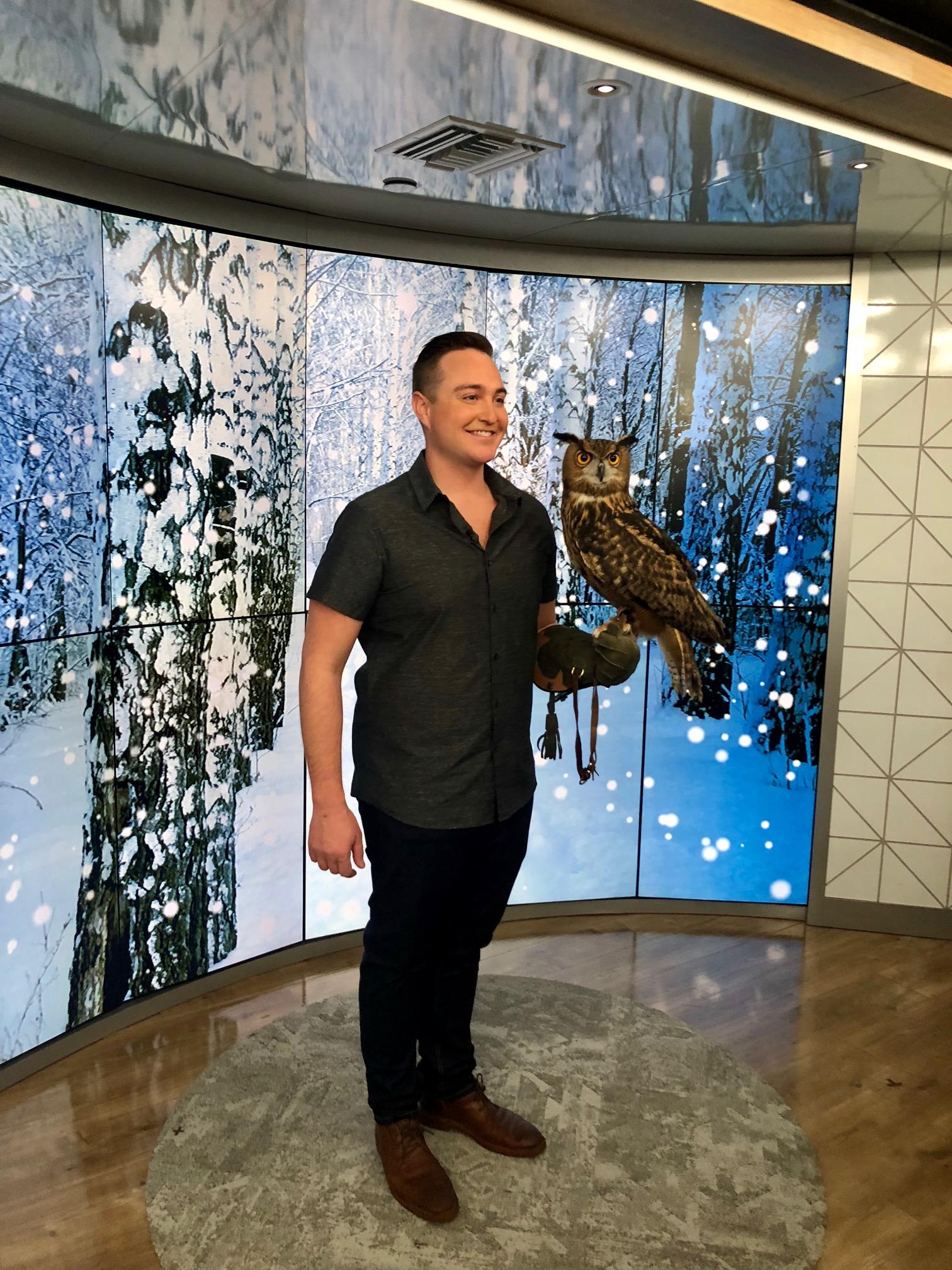 owl tease.jpg