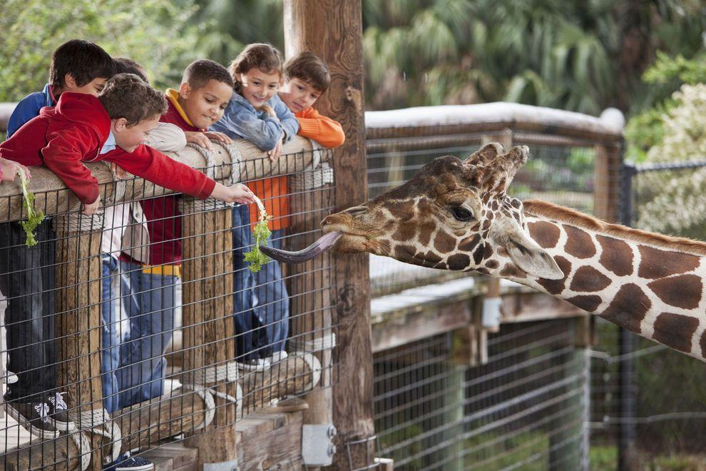 Zoo Pic.JPG