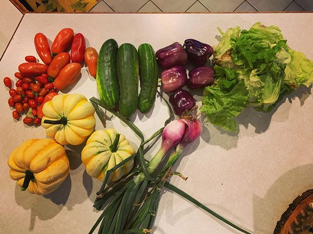 Today's garden bounty was so colorful 💗 I'm so glad I'm starting to get some produce!!! #garden #growwhatyoueat #homegrown #idahome