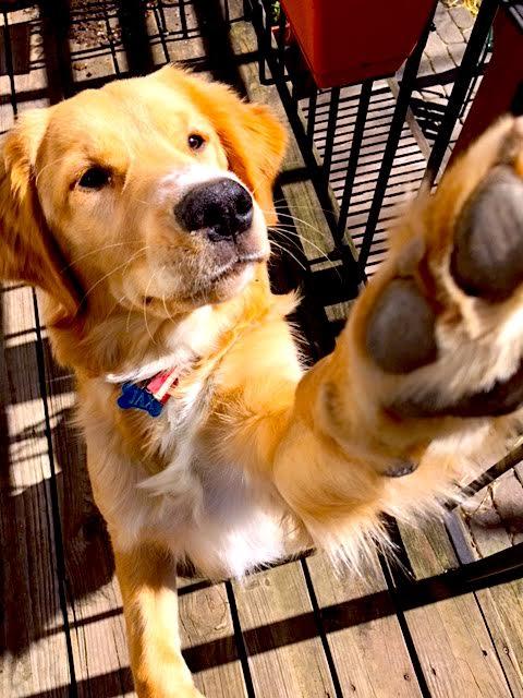 Doggy Tutor.jpg