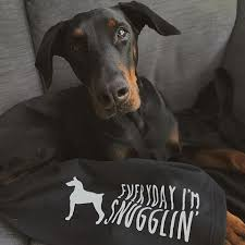 Me? I'm a dog person. This is my favorite breed right here, although this isn't my dobie, he looks exactly like this guy.