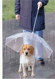 Not the guy I see but super cool dog umbrella. Til the wind blows. Still neat idea though.