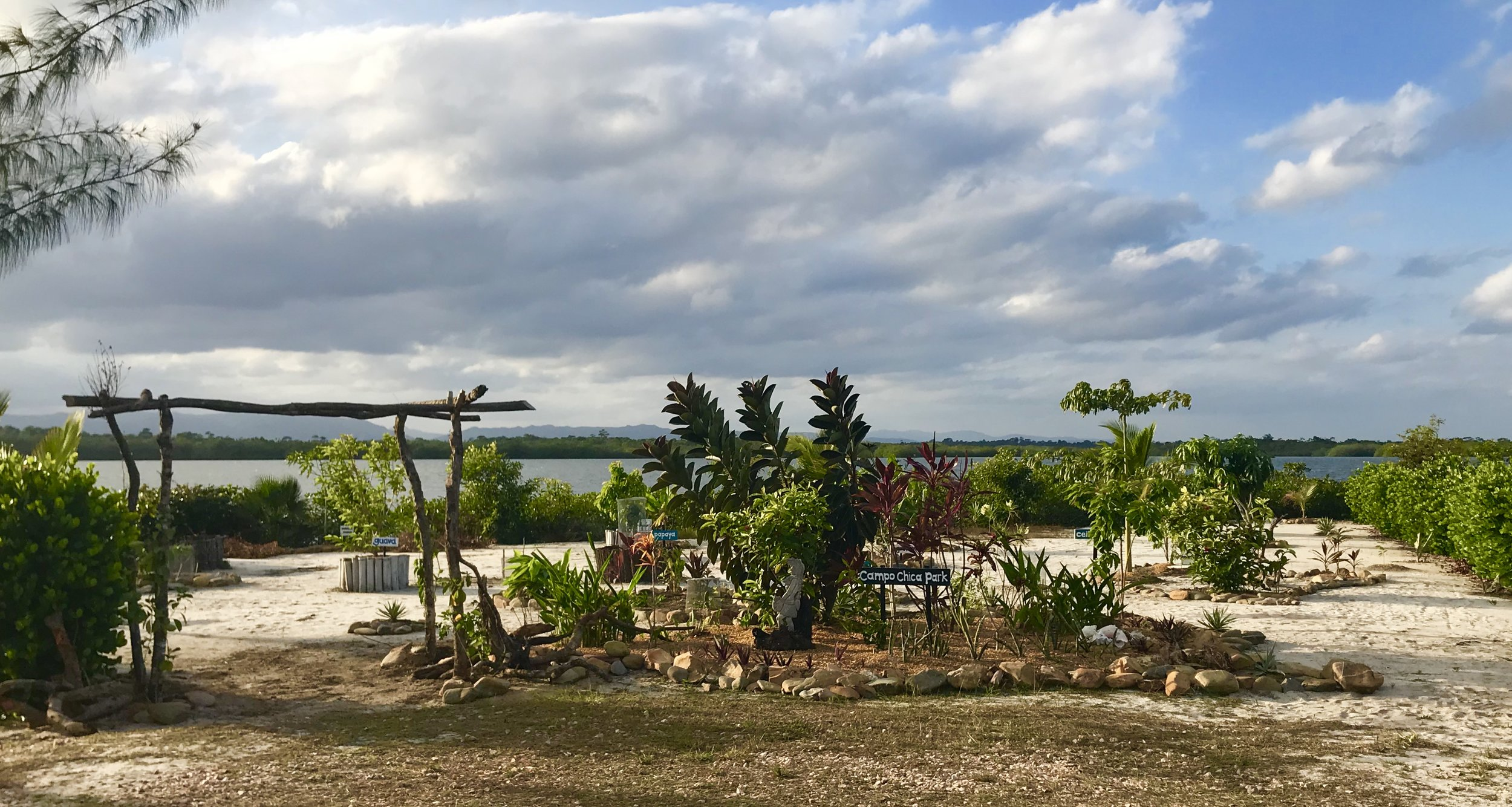 Our community park of tropical fruit trees