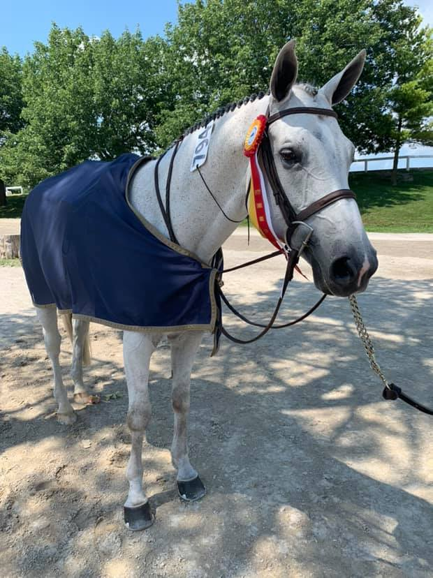From Cindy Chaconas: Proud of my boy Rocky who was Reserve Champion in the older adults at the Kentucky Summer Horse Show and a big thanks to Over the Hill Farm!