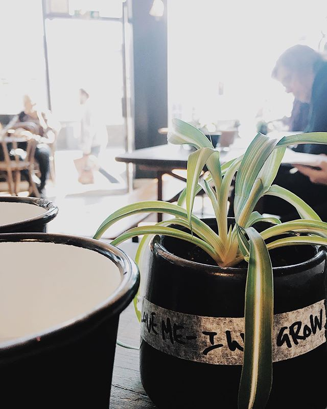 Love me – I will grow 🌱 #plantlife #life #love #cafelife #coffee #bristol #theworkhousecafe