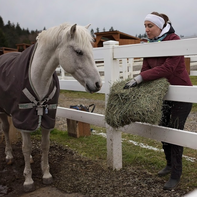 Woman feeding a flake of hay to a white horse in between fence railings.