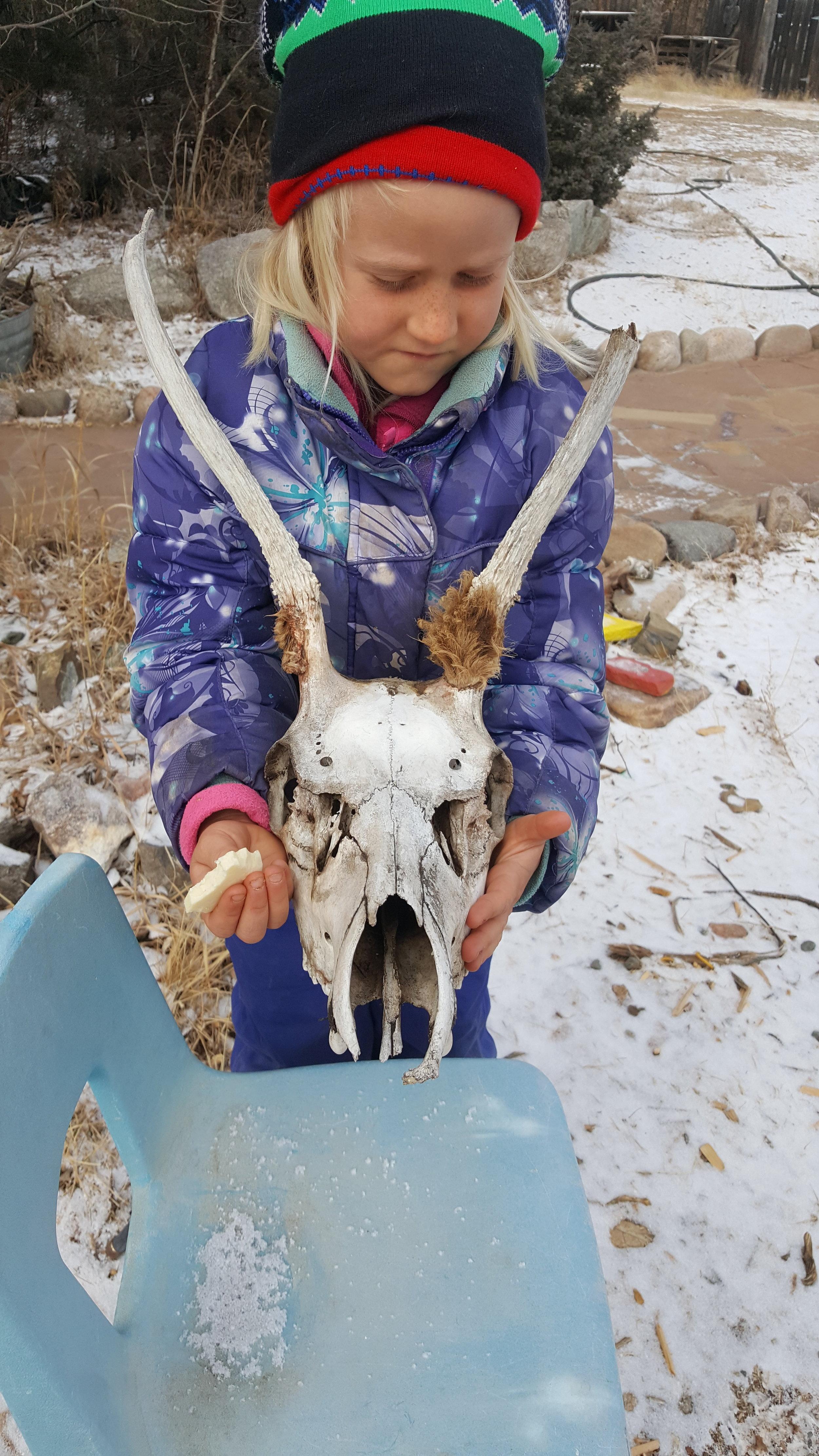 Elk skull. Confirmed.