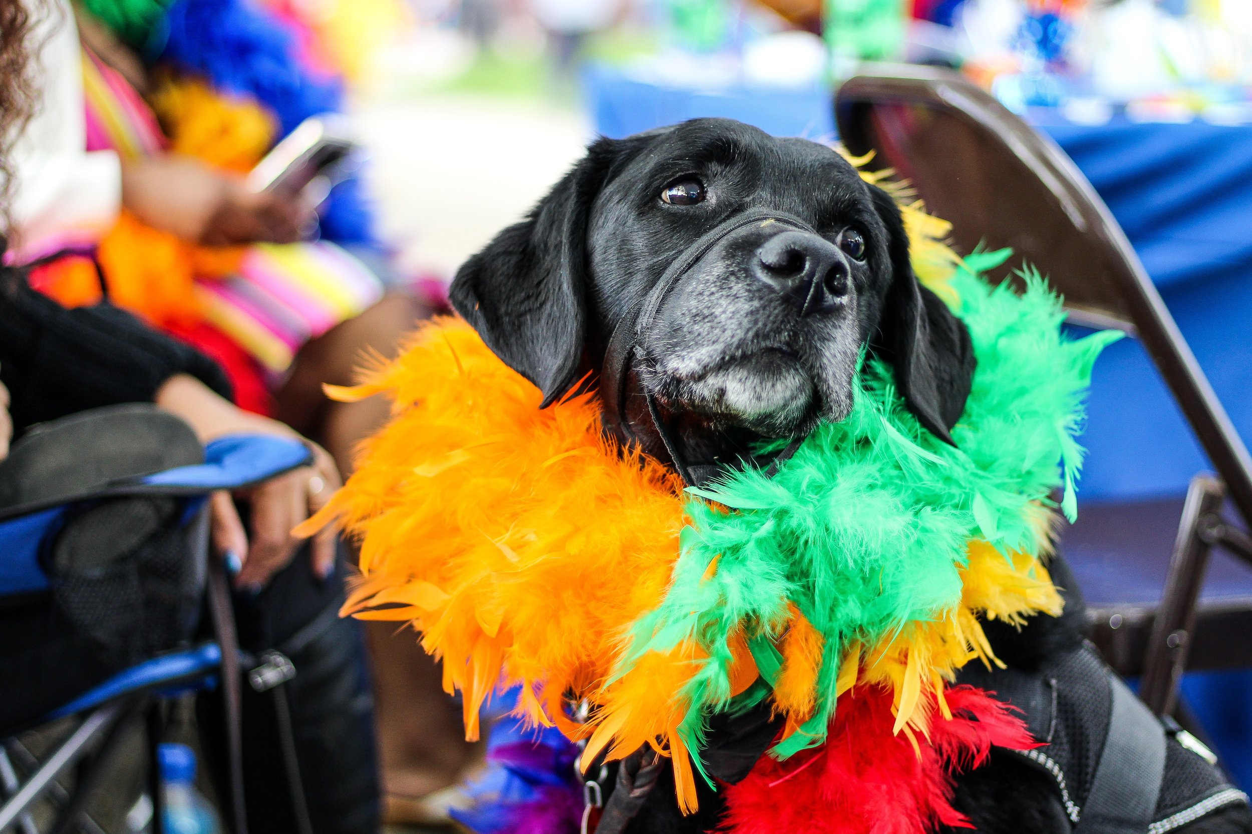 The Pride parade in Vancouver takes place on the Sunday of the August long weekend in Vancouver. It will be crowded and loud so you might want to leave your furry friends at home.