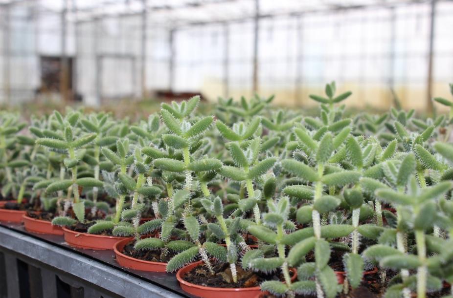 cacti5.jpg