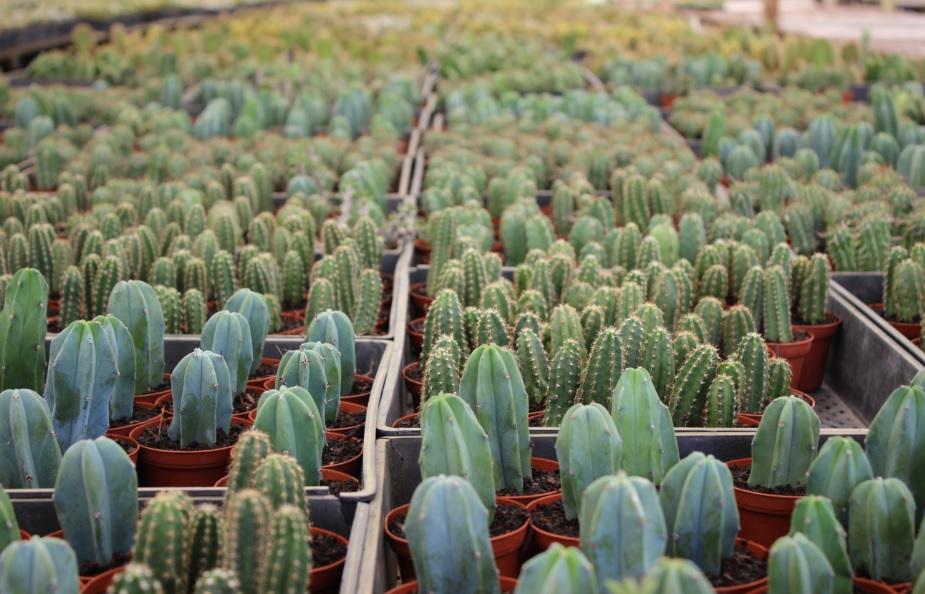 cacti7-1.jpg