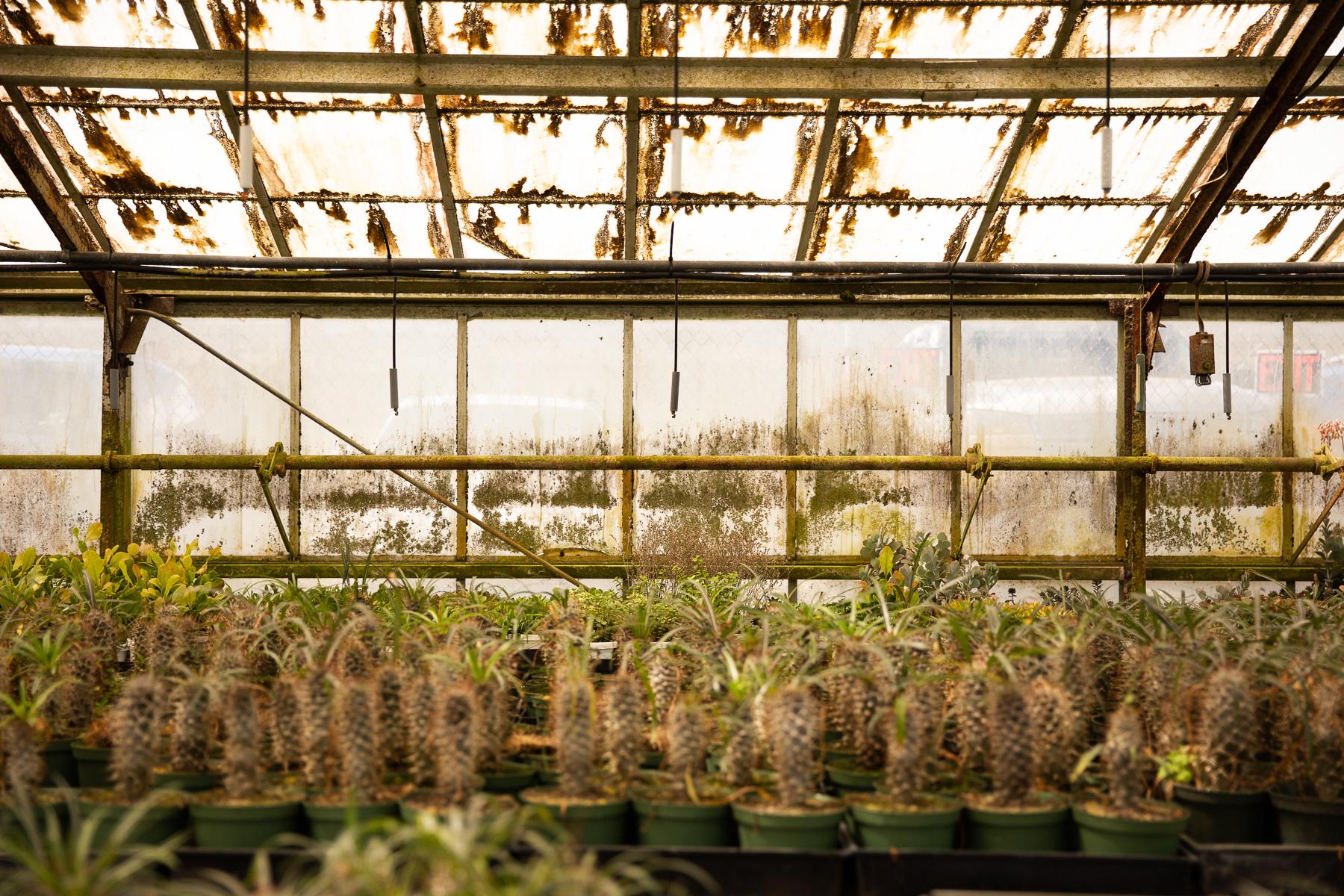 floridacactus (4 of 5).jpg