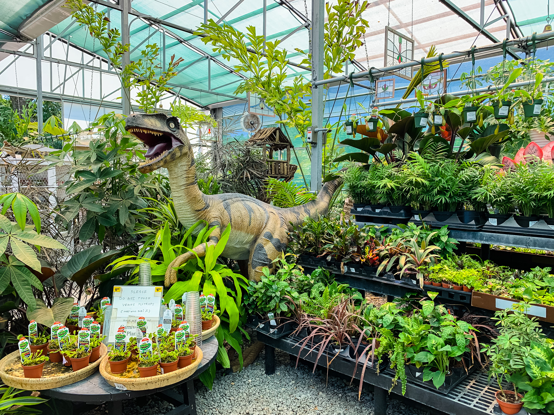 Ing Plants In Orlando Lemonhearted