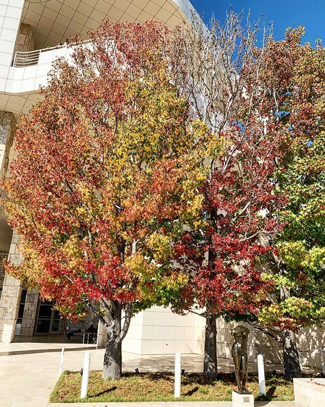 """Who says LA can't """"Fall""""? #fall #gettymuseum #itscold #la #autumn"""