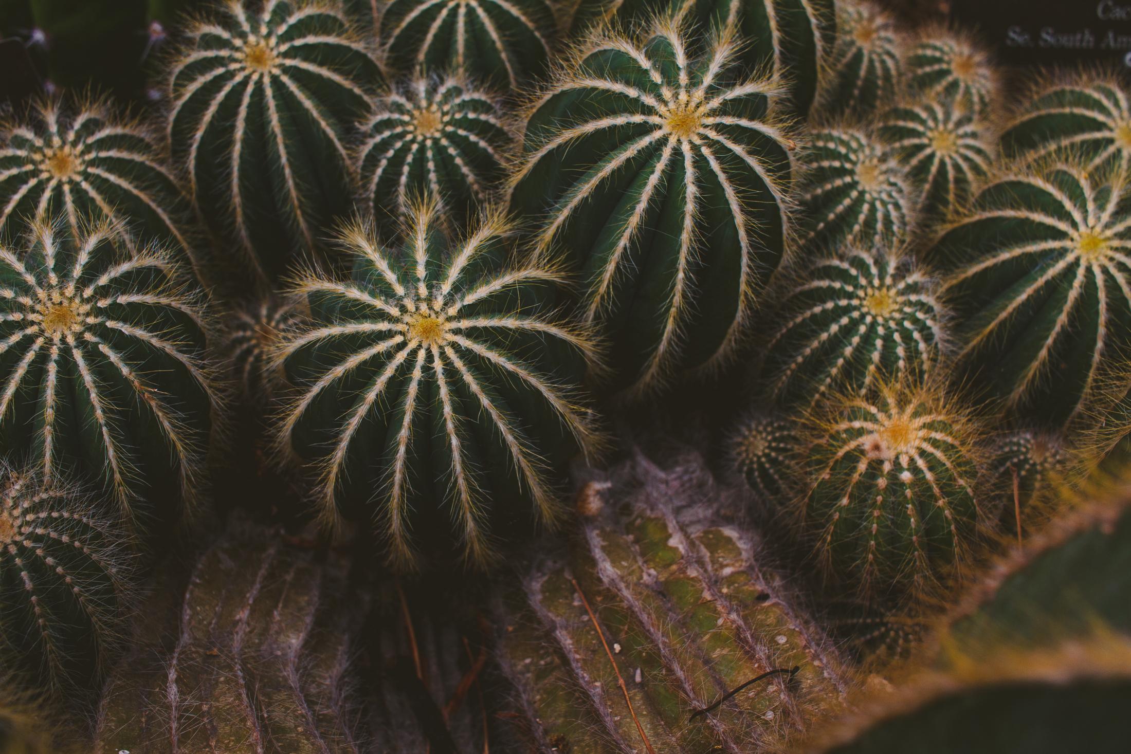 Chicago Botanic garden -