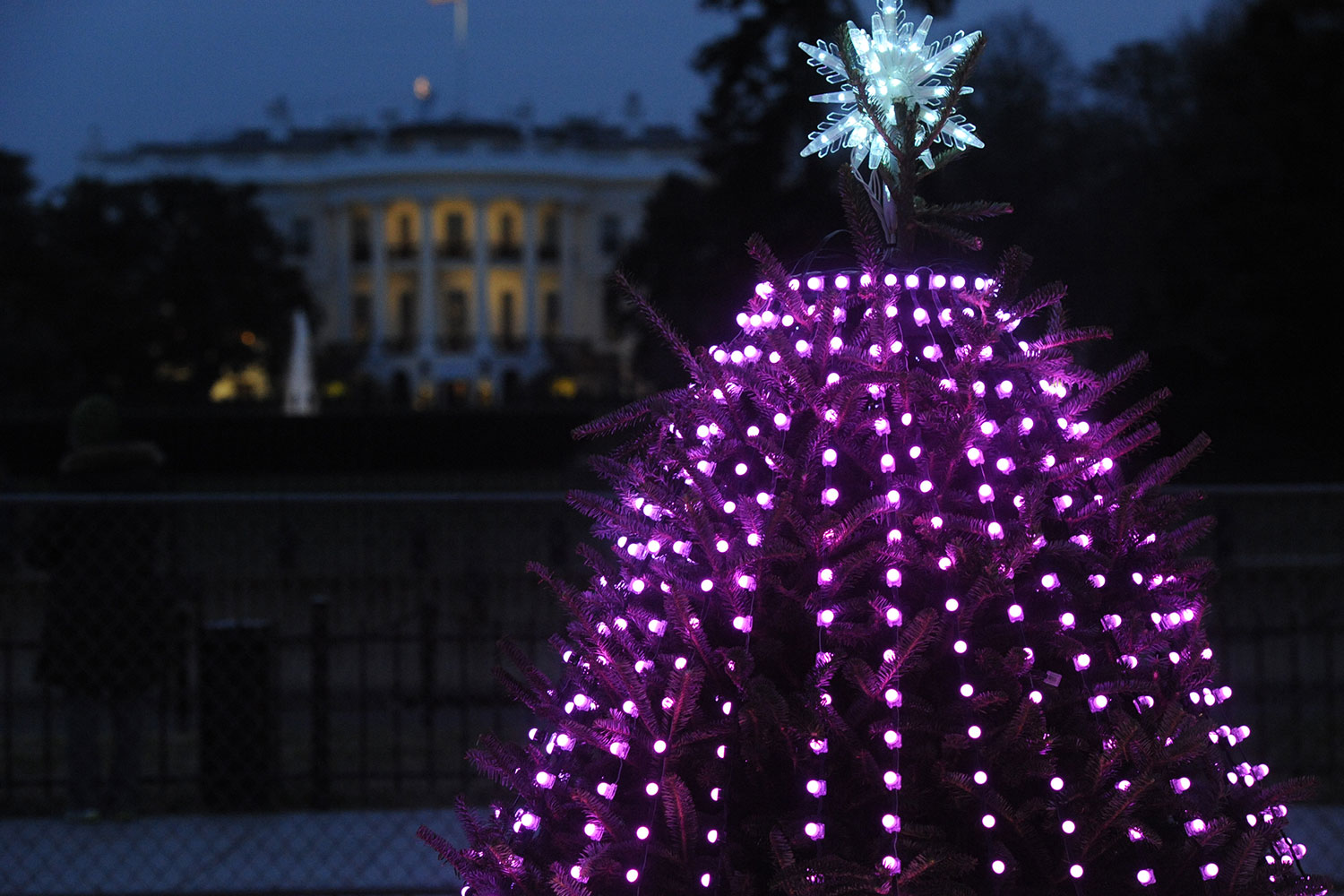WHITE HOUSE XMAS TREES