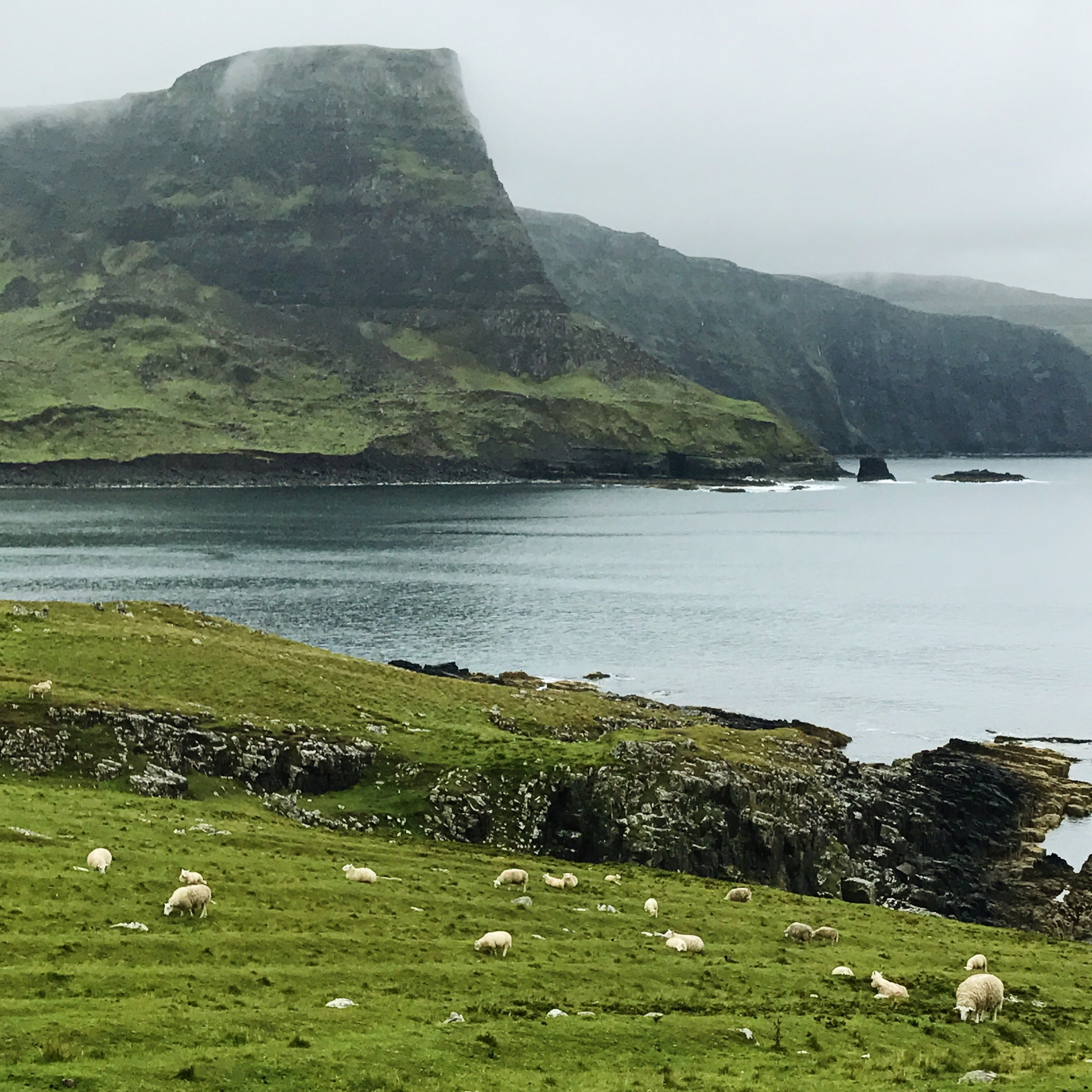 Neist Point. Supposedly you can see whales and dolphins here, but i was too busy filming sheep to notice.