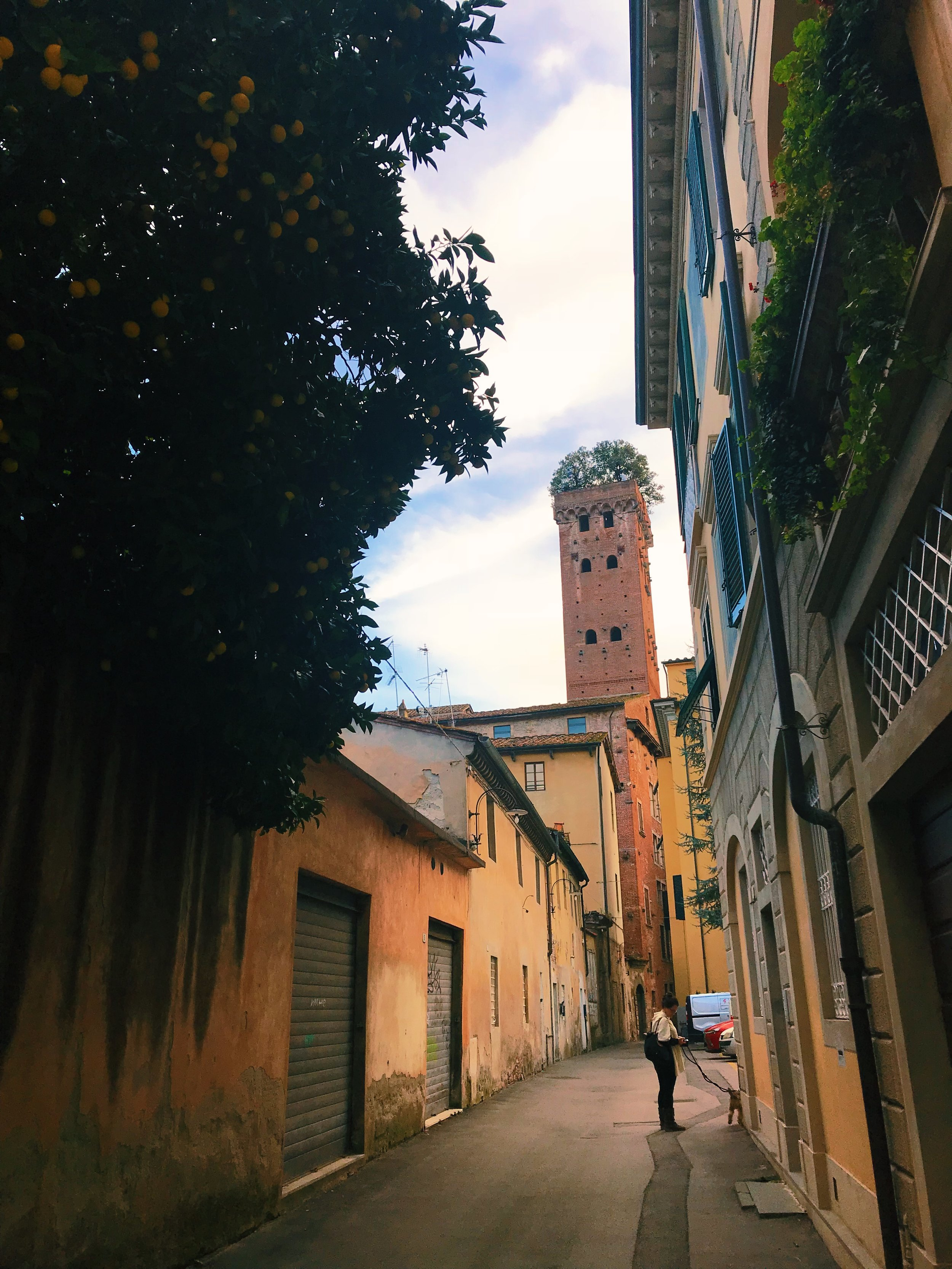 Famous for its rooftop trees, the   Torre Guinigi   (Guinigi Tower) is popular landmark in Lucca. Back in the 1300s, wealthy families tried to outdo each other when it came to bell towers. This is one of the last towers remaining within the city's walls.