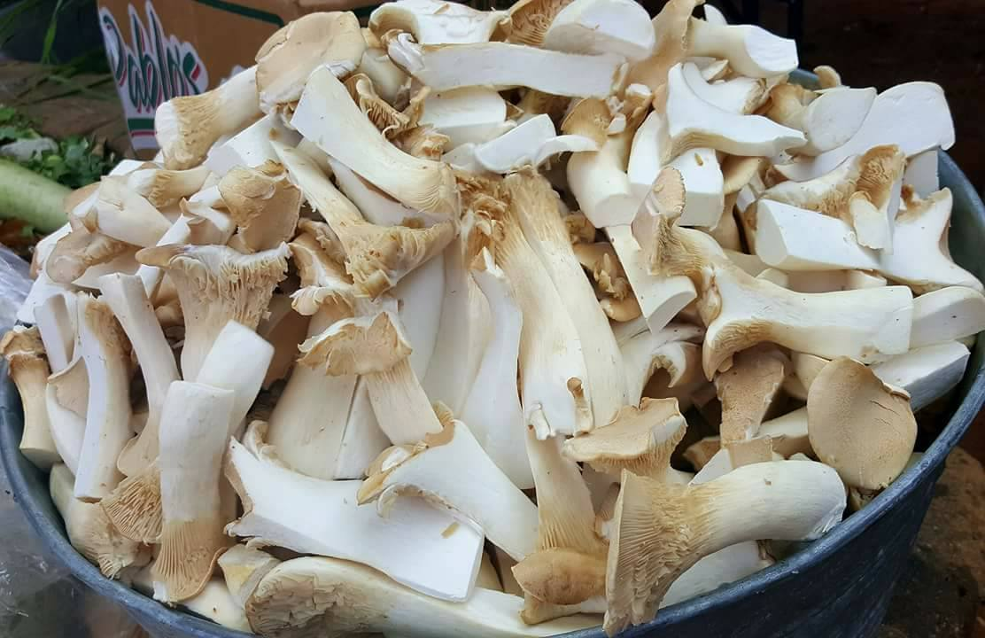 Overgrown trumpet mushrooms turned into delicious dishes. Photos: Jodie Rubin.