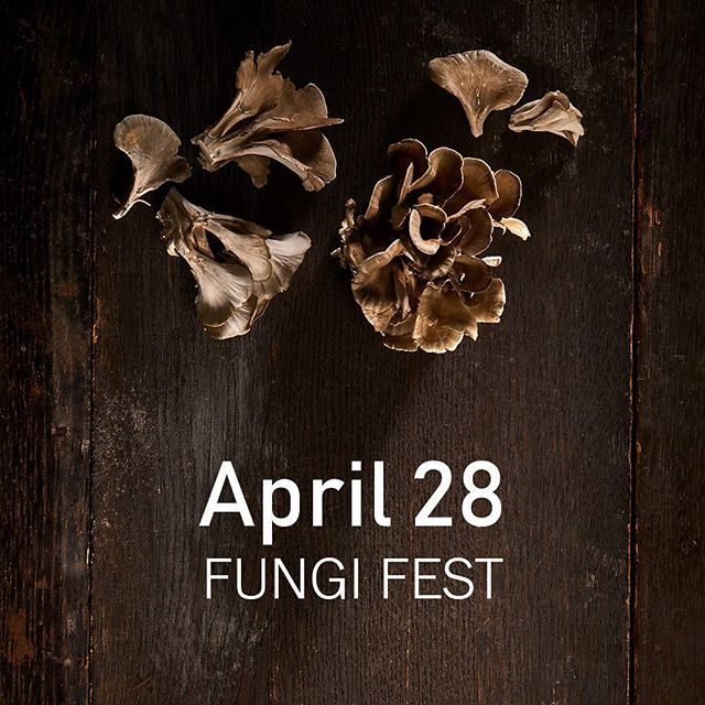 TICKETS ON SALE! We're going even bigger this year. Come visit the farm this April 28th, when we will be hosting an array of vendors, beer, wine, live music, and some furry friends (truffle dogs anyone?) as a celebration of not only our mycophile brethren, but of everything local! In addition, 100% of the proceeds will be going to a non profit very dear to our hearts, the Ceres Community Project. Details and tickets at the link in our bio! 🍄 #sonoma #sonomacounty #sebastopol #shoplocal #mushrooms #mycopiamushrooms #farmlife 🍄 For @cerescommunityproject with @oliversmarket @moonlightbrewing @merry_edwards_winery @redcarwine @goatlandia_sanctuary @wildbrine @sporgymushrooms @burnsidetheband