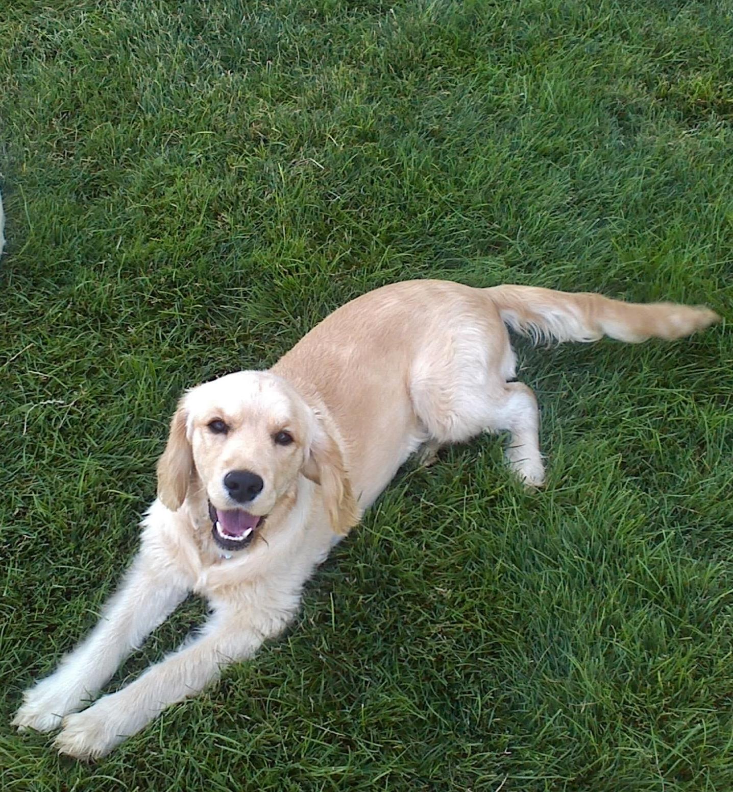 Piper, 38 lbs