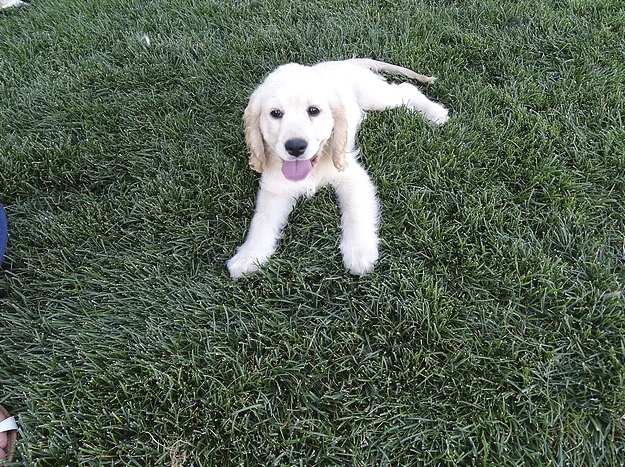 Star is 12 weeks old now and she has been such a joy to us!