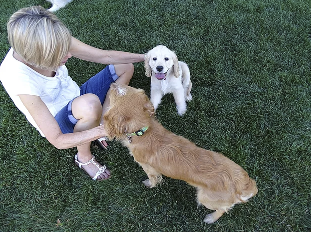 Here is my mom helping me work with our dogs.