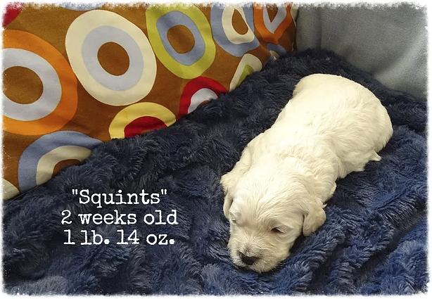 12_squints 2 weeks old.png
