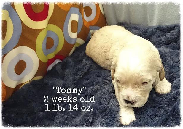 14_tommy 2 weeks old.png