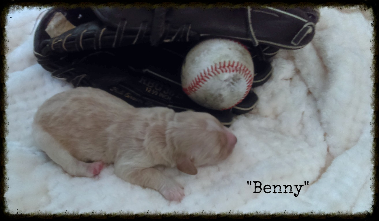 Benny_Birth Weight_2.jpg