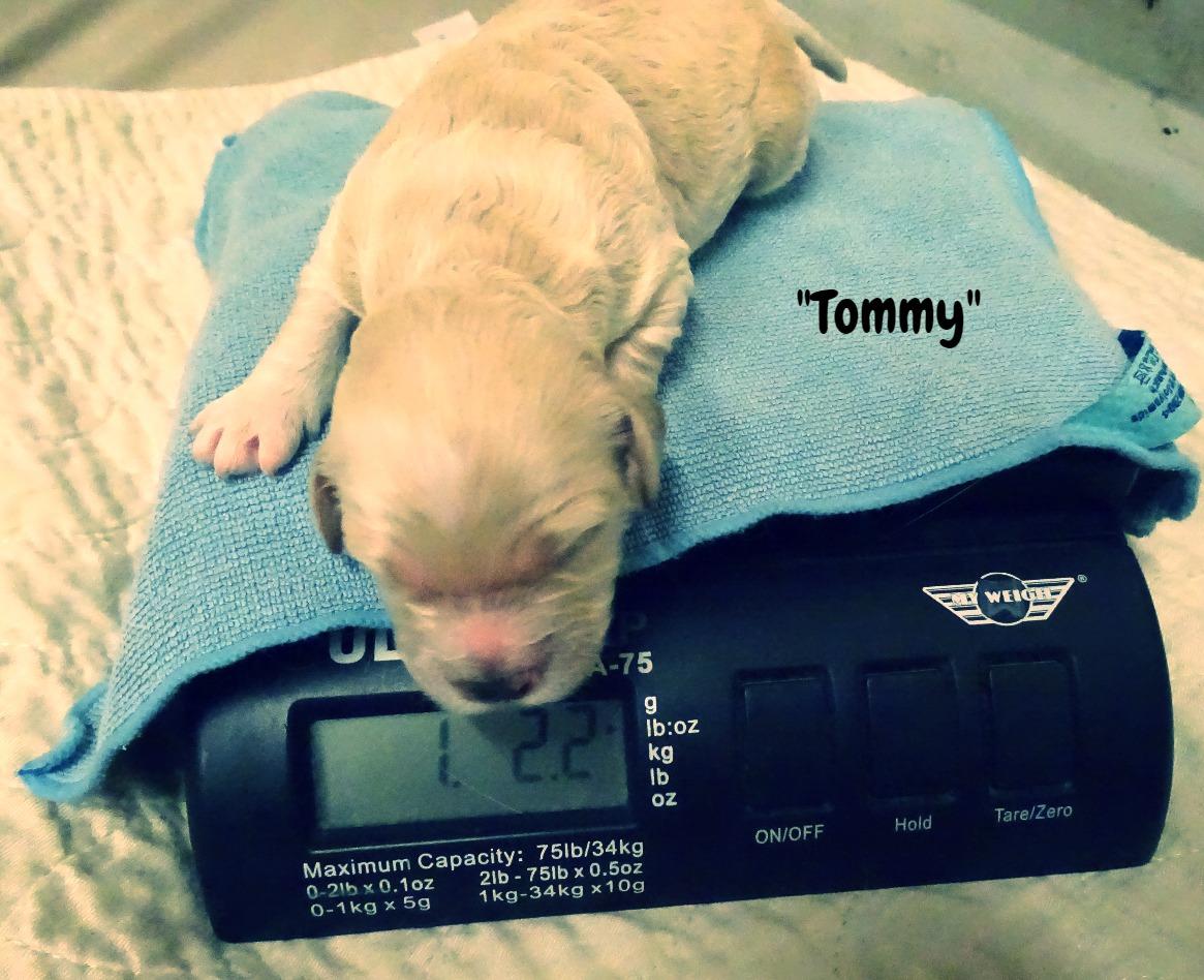 Tommy_On Scale_1 week old.jpg