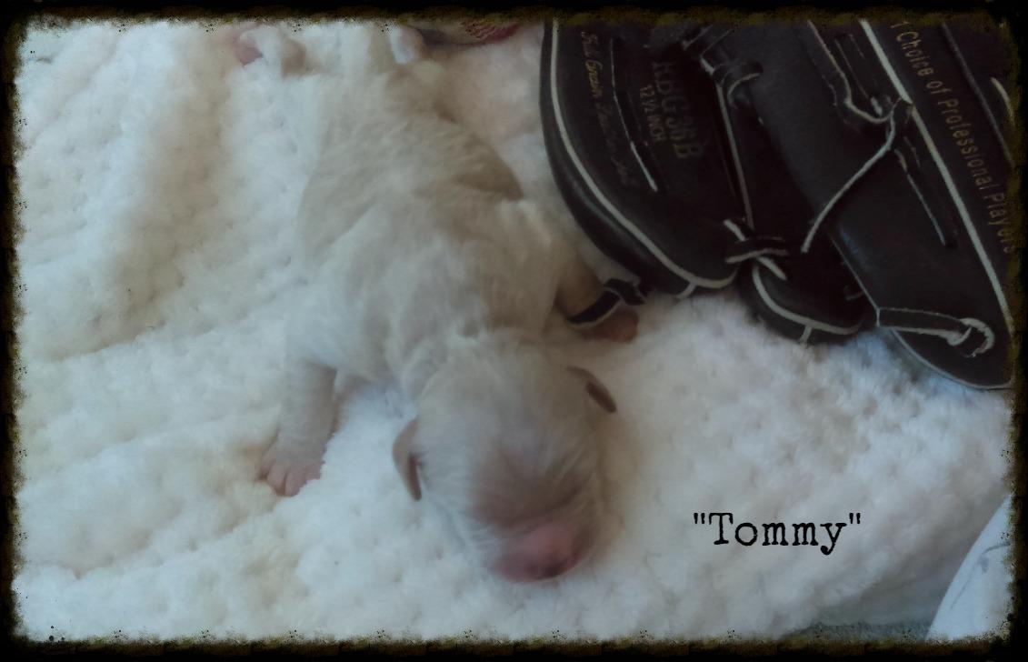 Tommy_Birth Weight_1.jpg
